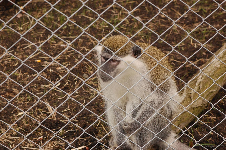 Зоопарк Бургас